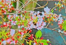 flower10_S