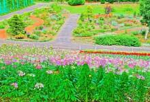 flower6_S