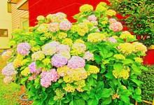 flower8_S